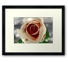 White and Red Rose Framed Print
