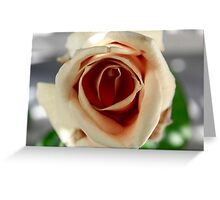 White and Red Rose Greeting Card