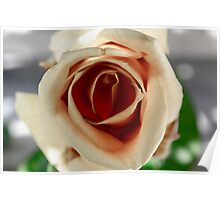 White and Red Rose Poster