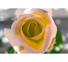 Pink and Orange Rose Photographic Print