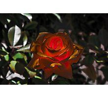 Golden Flower Photographic Print