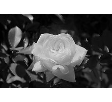 White Beauty Photographic Print