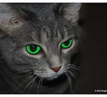 Green Eyed Cat by AngelGirl21030