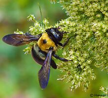 Busy Bee by hannahsview