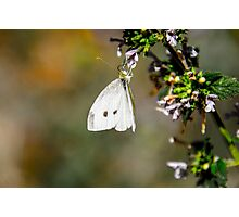 Butterfly Playground Photographic Print