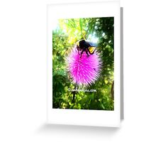 Bumble Bee On a Oklahoma Purple Thistle Greeting Card