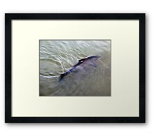Swimming In The Shallows Framed Print