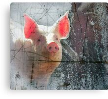 Pink Pig Canvas Print
