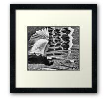 Between roost Framed Print