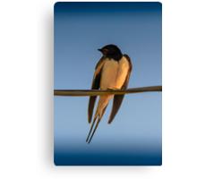 Happy Little Swallow Canvas Print