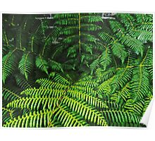 Fern Against the Wall Poster