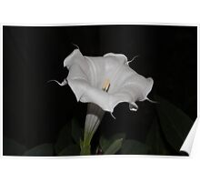 First Moon Flower of 2013 Poster
