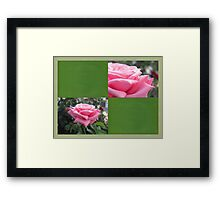 Pink Roses in Anzures 6 Blank Q5F0 Framed Print