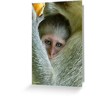ALWAYS TUCKED IN - THE VERVET MONKEY - ,CERCOPITHECUS PYGERYTHRUS - Blou Aap Greeting Card
