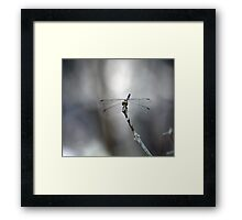 Calender 2014 - Dragon Fly Framed Print