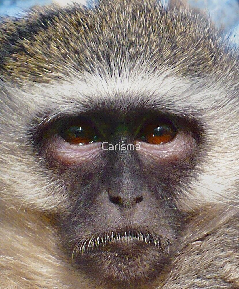 Soulful eyes by Carisma