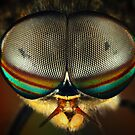 Horsefly by jimmy hoffman
