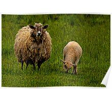 Watchful Ewe Poster
