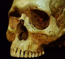 Human Skull - Science Museum by Jessica Reilly