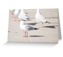 Home of the Pigeon Greeting Card