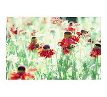 Dreamy Summer Photographic Print