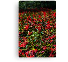 Red Oasis Canvas Print