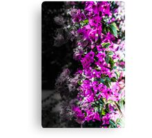 Life and Death Canvas Print