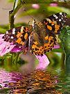Painted Lady - Butterfly by Yannik Hay