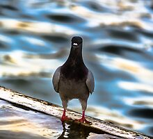 a Proud Pigeon  by Sotiris Filippou