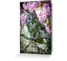 Great Grey Owl in the blossom Greeting Card