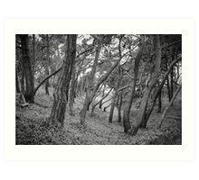 Baker Beach Trees Art Print