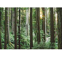 Sunset in Arcata Community Redwood Forest Photographic Print