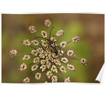Flower and insect Poster