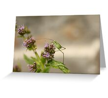 Little grasshopper and mint Greeting Card
