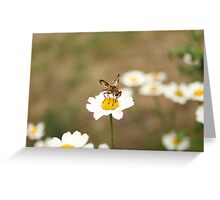 daisy and fly Greeting Card