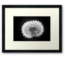 Dandelion in BW Framed Print