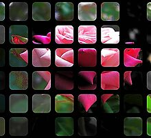 Pink Roses in Anzures 6 Art Rectangles 1 by Christopher Johnson