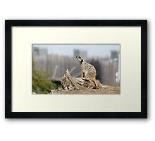Meerkat Sniff Framed Print