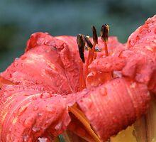 Red Flower by Alex Volkoff