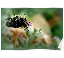 Bee Drizzled Poster