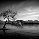 Lonely Tree by PerkyBeans