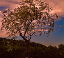 Evening Breezes by PineSinger