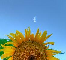 Sun & Moon by Donald Salsbury