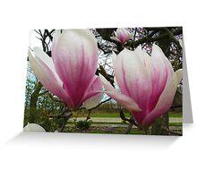 Twin Magnolias Greeting Card