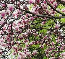 Magnolia Pink and Spring Green by SRowe Art