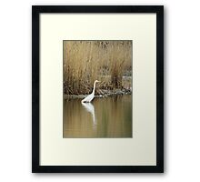 White Heron on The Hunt Framed Print