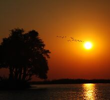 Chobe Sunset by BeckyMP