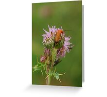 Its a bugs life!! Greeting Card