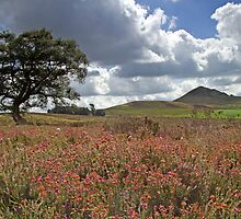 Harmby Moor by partridge