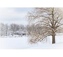Winter Willow Tree Photographic Print